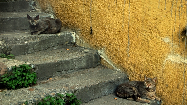 cats and a yellow wall